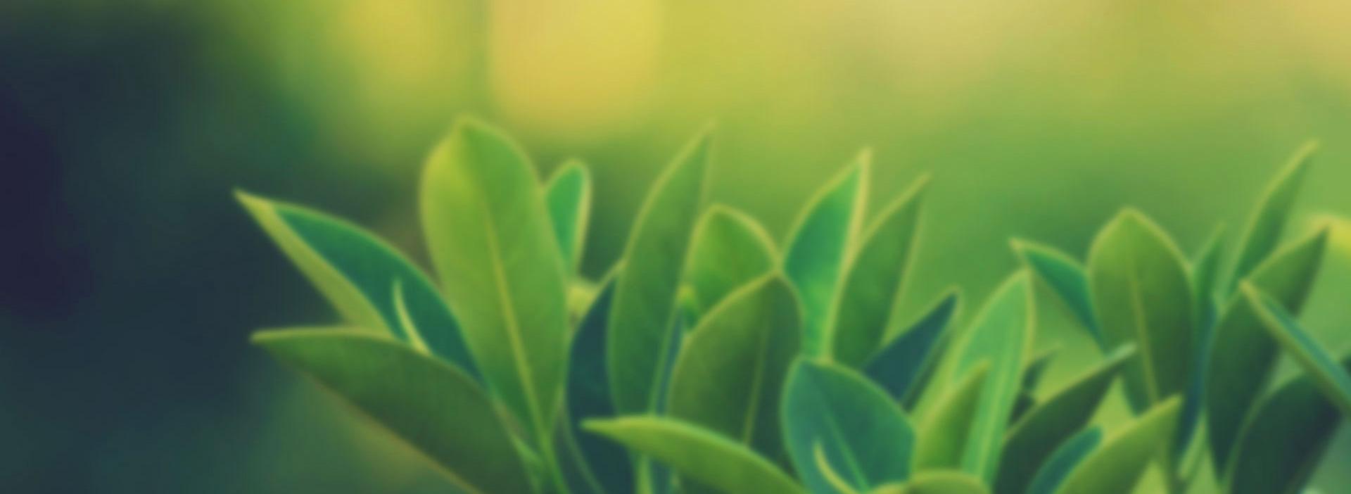 faranjite-karşı-hangi-bitkiler-iyi-gelir
